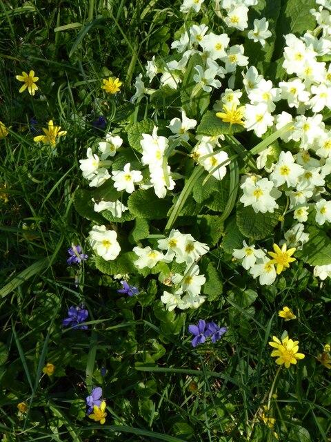 Spring flowers alongside Argal reservoir