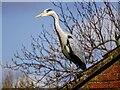 SU1980 : Heron, Swindon by Brian Robert Marshall