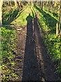 TF0820 : Shadowman by Bob Harvey