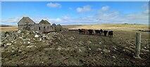 HP6100 : Littlegarth, near Uyeasound by Mike Pennington