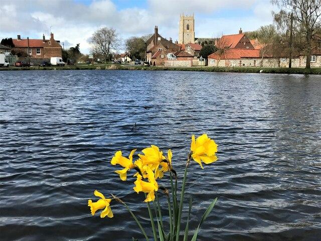 Daffodils in Great Massingham