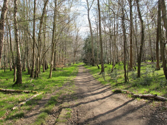 Permissive path with spring leaves, Egypt Woods
