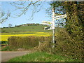 ST3837 : Yellow field at Righton's Grave by Neil Owen