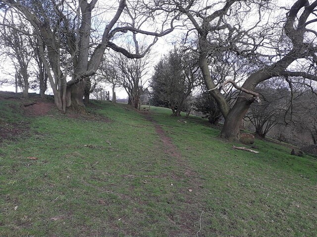 Footpath in the valley of the Wesley Brook