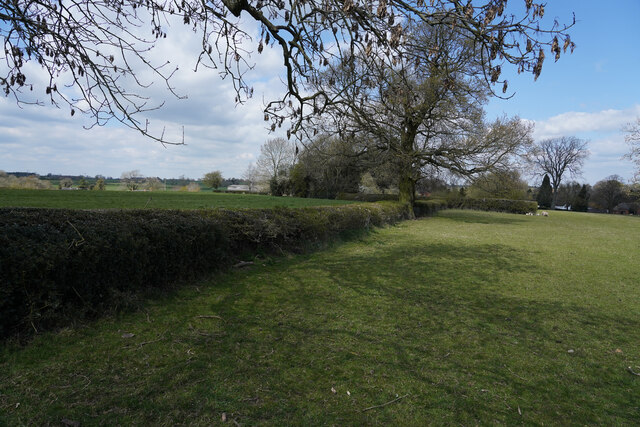 Looking along the hedge