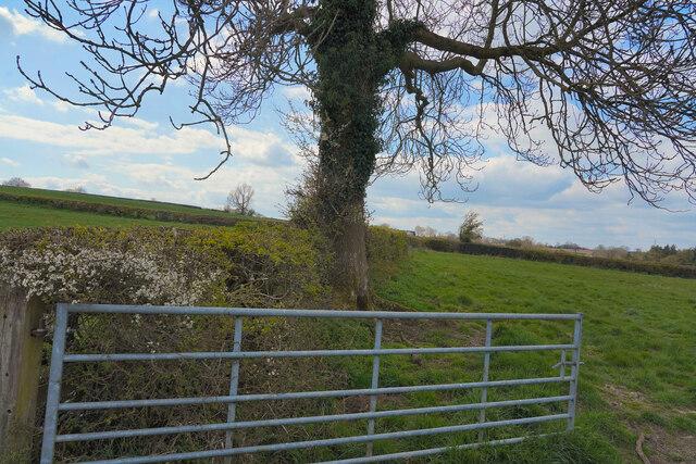 A rural scene
