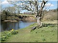 NY8677 : A pleasant spot by the River North Tyne by Oliver Dixon
