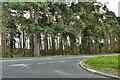 TL7888 : Weeting: Mundford Road by Michael Garlick