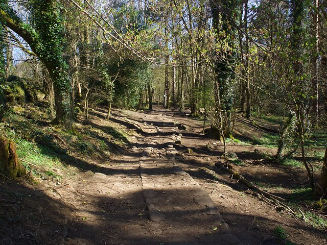 Track in Ecclesall Woods