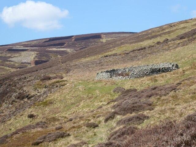 Sheepfold overlooking Hawsen Burn