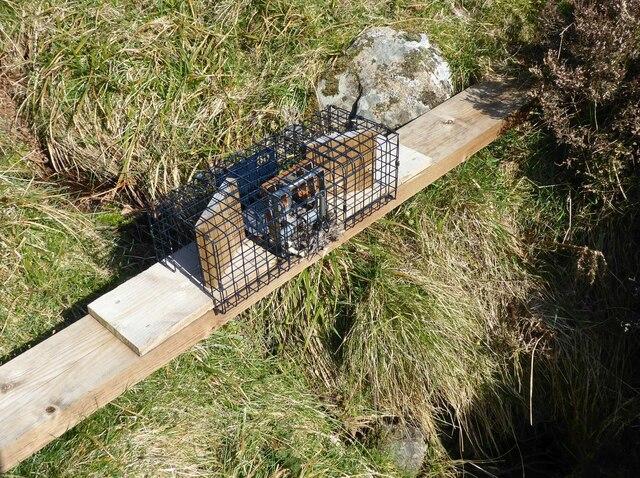 Vermin trap on bridge over the stream