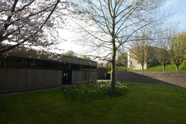 Daffodils by AV Services