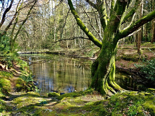 The Lower Sawmill Pond at Tollymore