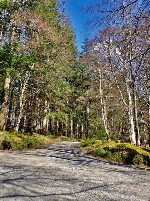 Forest drive crossroads north of the Old Bridge at Tollymore