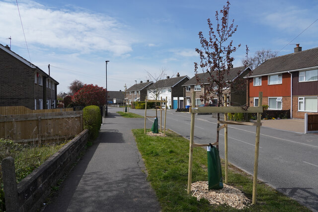 New trees on West Drive