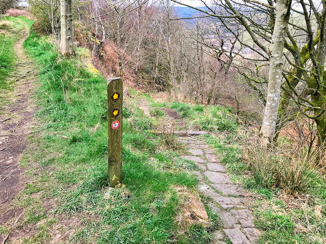 Path through Knowsley Wood