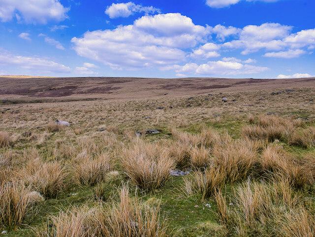 Walsden Moor