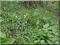 SS8577 : Spring flowers, Cwm y Gaer by eswales