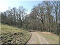 NY8362 : Byway from Elrington to Langley Castle by Oliver Dixon