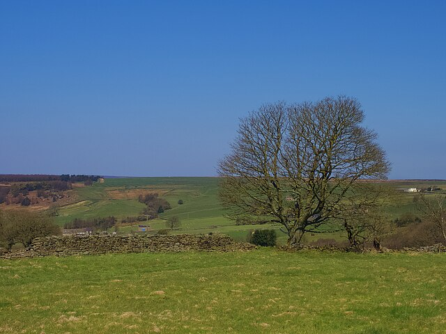 Solitary tree at the edge of Brimham Moor