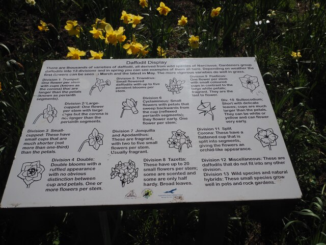 Daffodil Information Board at The Lodge Grounds