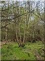 TF0820 : A coppiced tree by Bob Harvey