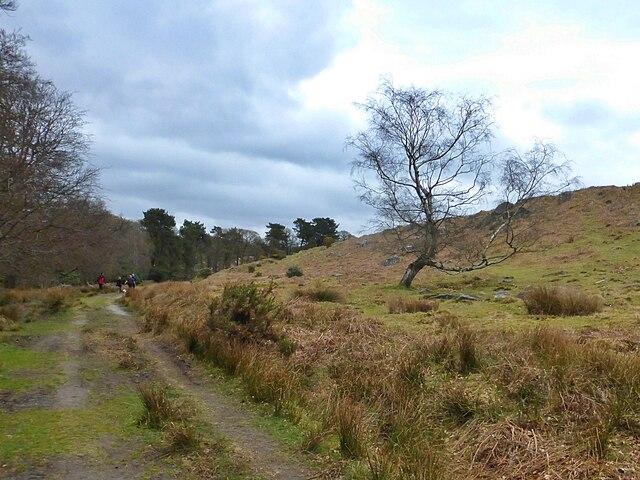 Solitary moorland tree