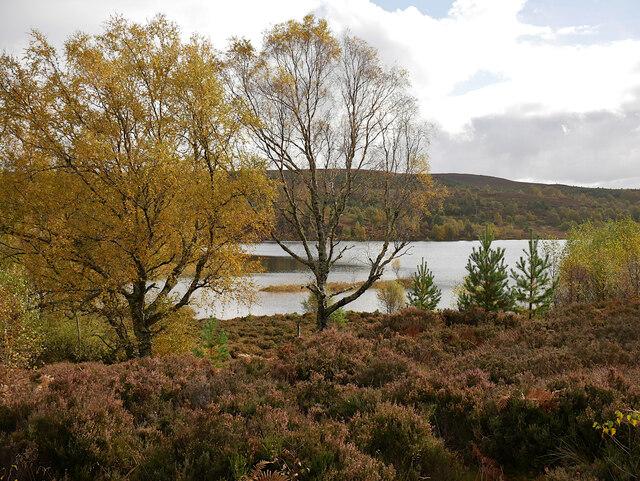Trees by Loch na Bà Ruaidhe
