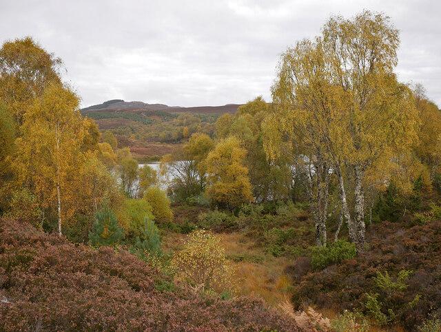 Birch trees, by Loch nam Faoileag