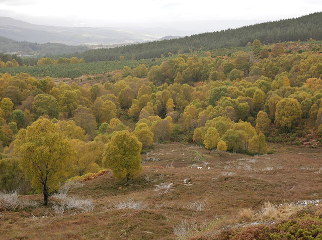 Woodland, by Cnoc na Moine