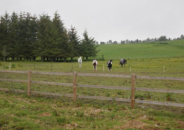 Horses, Achmony