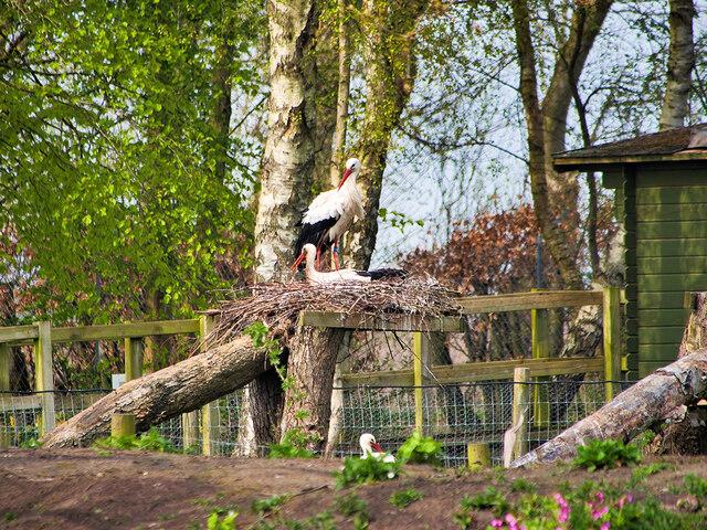 Martin Mere Wetland Centre, Stork Enclosure