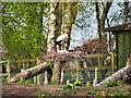 SD4314 : Martin Mere Wetland Centre, Stork Enclosure by David Dixon