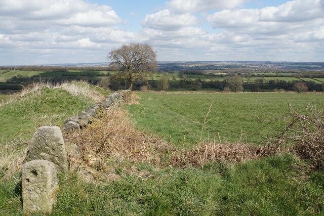 Field boundary near Alton