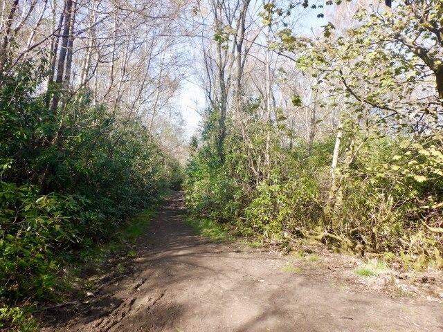 Path, Fir Park