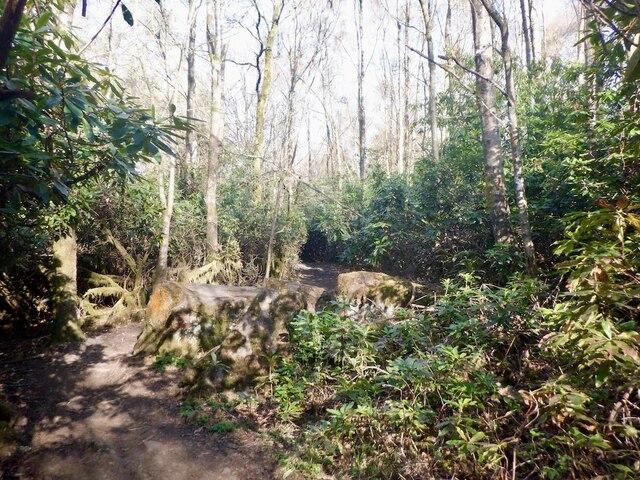 Path, Gillies Hill