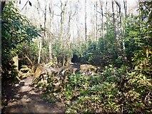 NS7791 : Path, Gillies Hill by Richard Webb