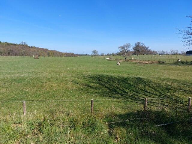 Grassland at Bolam Lake House
