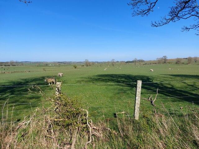 Grass fields at Old Deanham