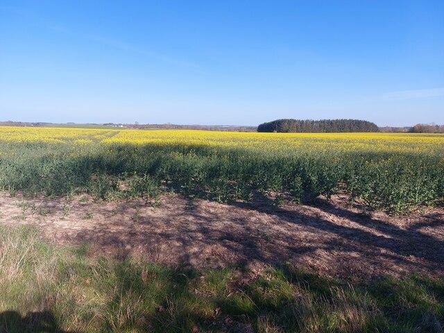 Arable field at Ogle South Farm