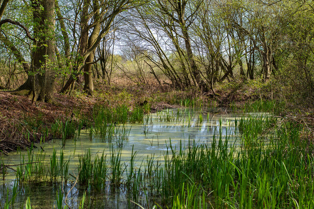 Woodland in the Boultham Mere Nature Reserve, Lincoln