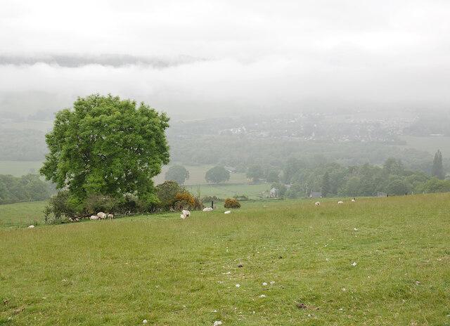 Fields, by Drumbuie