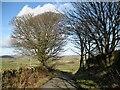 SD2780 : The Cumbria Way near Higher Lath Farm by Adrian Taylor