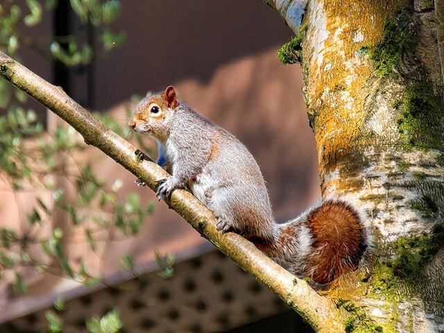 Squirrel at Summerseat Island