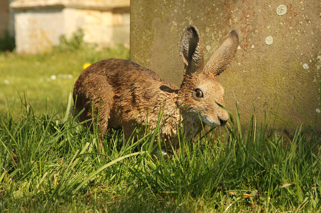 Stixwould hare