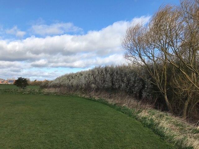 Blackthorn scrub on the edge of Grange Park
