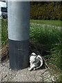 ST6588 : A sad angel by a lamppost by Neil Owen