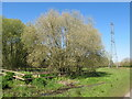 TQ0586 : Male and female goat willows, Denham Country Park by David Hawgood