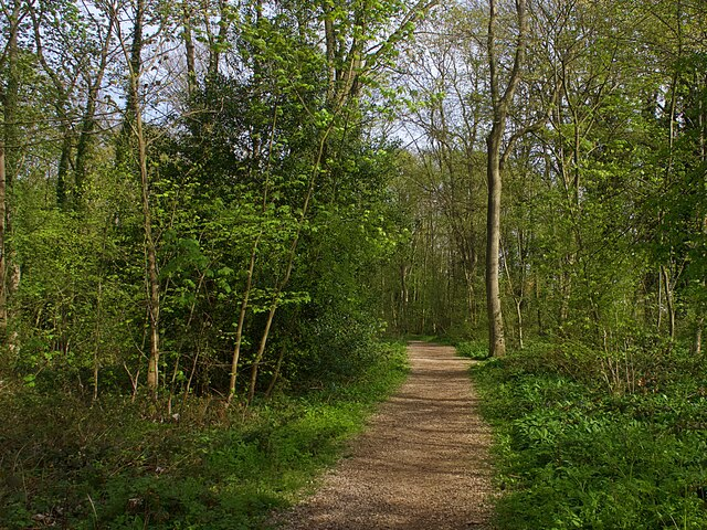 Path in Dyscarr Wood
