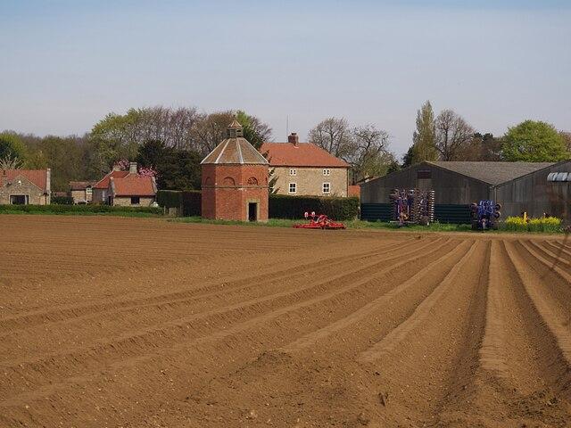 Potato field at South Farm